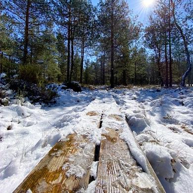 Snötäckt träspång på Frostavallen